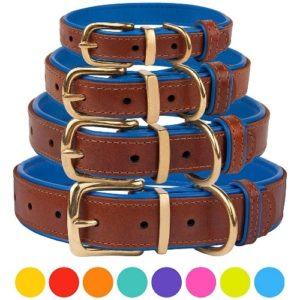 CollarDirect Leather Dog
