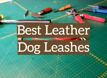 Best Leather Dog Leashes