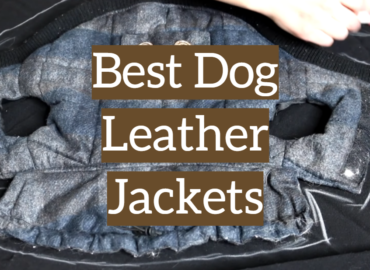 Best Dog Leather Jackets